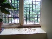 inside kitchen window